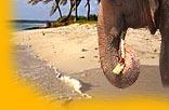 Malediven Tourismus